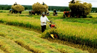 Tin tức nông nghiệp