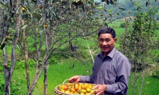 Mô hình trồng hồng không hạt ở Bắc Kạn