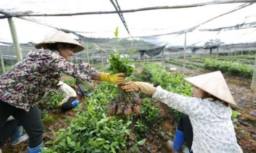 Đề xuất khung hỗ trợ phát triển sản xuất, tạo việc làm, tăng thu nhập cho các đối tượng nghèo trong Chương trình MTQG giảm nghèo bền vững giai đoạn 2021-2025 của tỉnh Lào Cai
