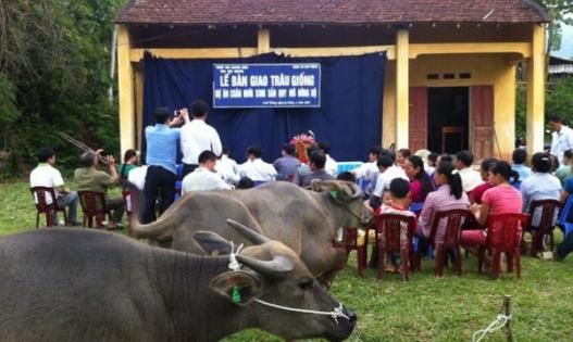 Xây dựng mô hình chăn nuôi trâu sinh sản tại Thái Nguyên