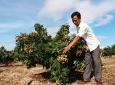 Đánh giá kết quả thực hiện và mức độ tham gia của đối tượng hưởng lợi trong thực hiện dự án hỗ trợ phát triển sản xuất để giảm nghèo ở tỉnh Đắk Lắk