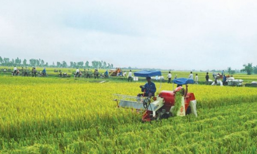 Đề xuất về cơ chế, chính sách hỗ trợ PTSX, tạo việc làm, tăng thu nhập tại tỉnh Quảng Ngãi.
