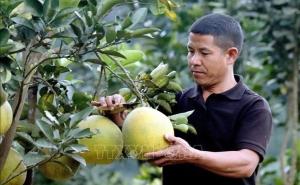 Kết quả hỗ trợ sản xuất ở huyện Sốp Cộp tỉnh Sơn La