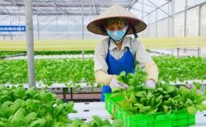 Đề xuất hỗ trợ HTX nông nghiệp vượt đại dịch Covid-19