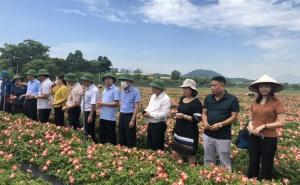 Lãnh đạo Bộ Nông nghiệp và Phát triển nông thôn thăm và làm việc tại mô hình sản xuất nông nghiệp trên địa bàn thị xã Sơn Tây