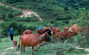 Tiềm ẩn những tai nạn lao động trong nông nghiệp