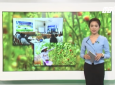 Thí điểm liên kết sản xuất tiêu thụ nông sản giữa doanh nghiệp, hợp tác xã và hộ nông dân...